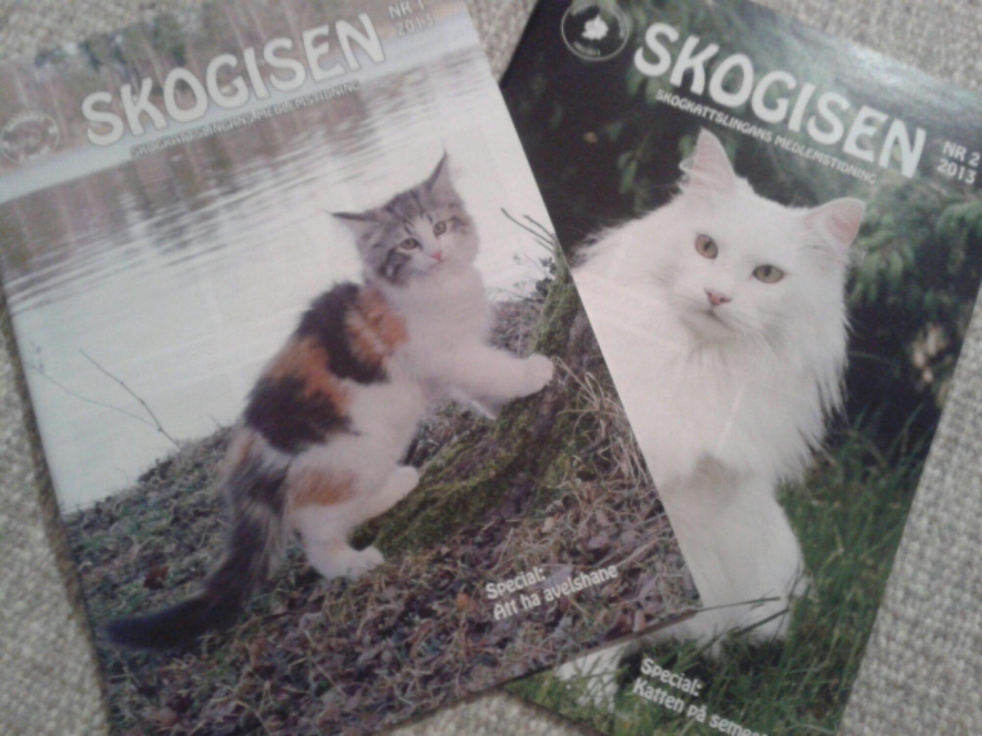 Tidningen Skogisen med norska skogkatten S*Aborgatos Can-Can