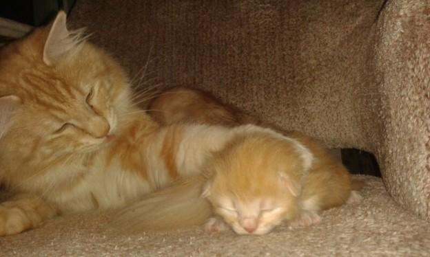 Kattpappan hjälper till