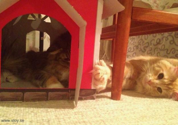 Kattmamman söker en stund ro i lekhuset