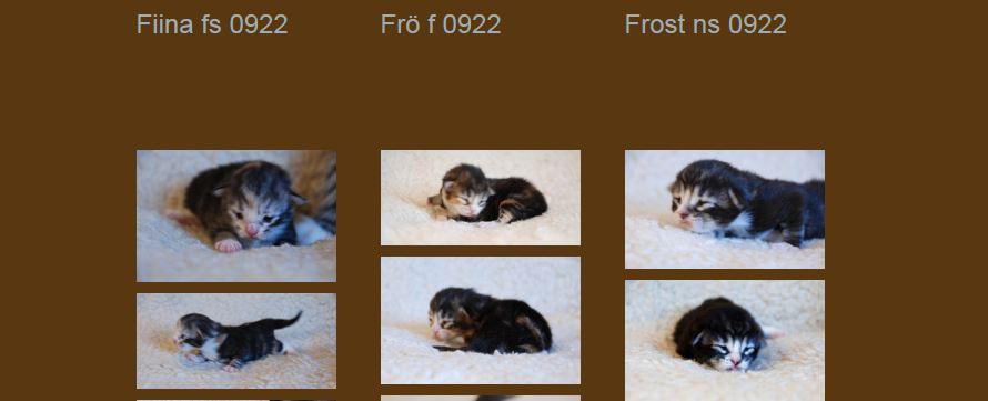 Kattungar födda den 29 november 2013.