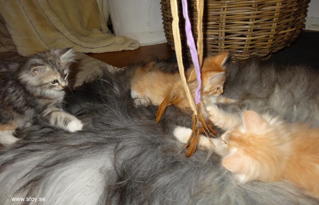 Kattvippa med tre tygband