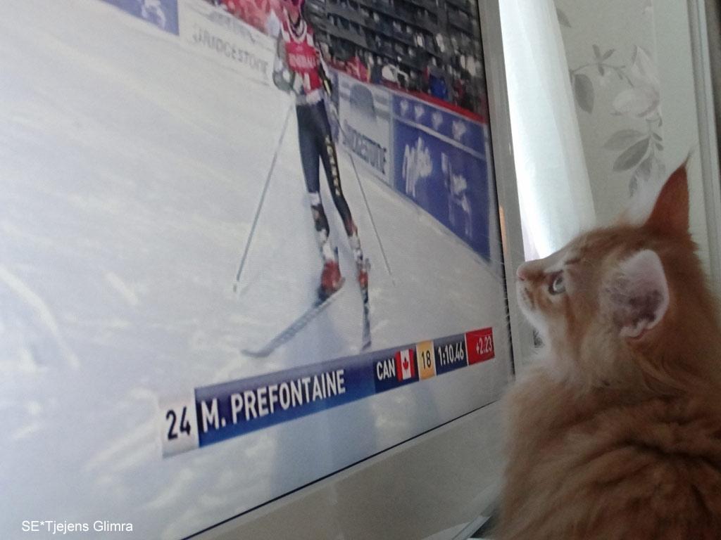 Kattungen Glimra gillar visst när det är skidor på tv. Hon har kolla flera gånger idag.