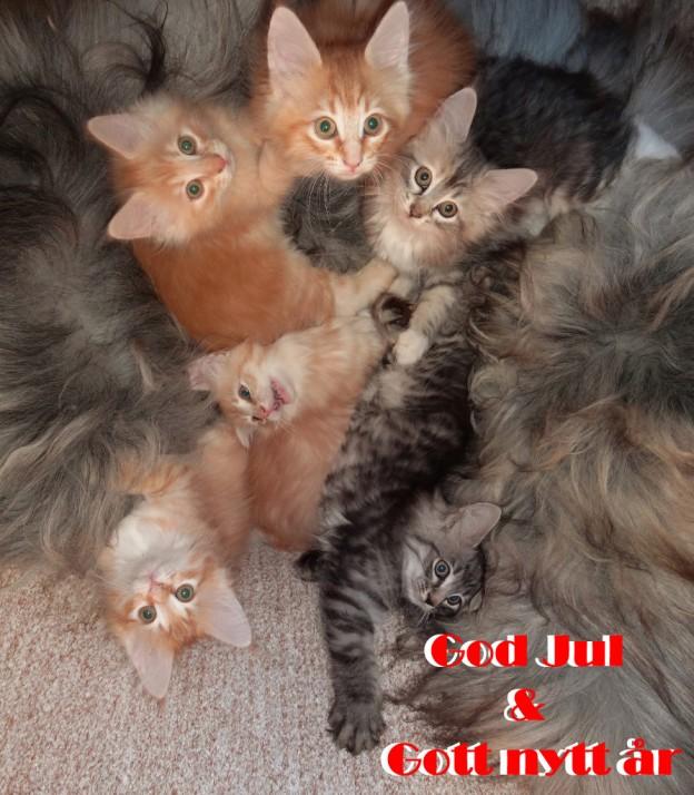 God jul och Gott nytt år önskar små katterna