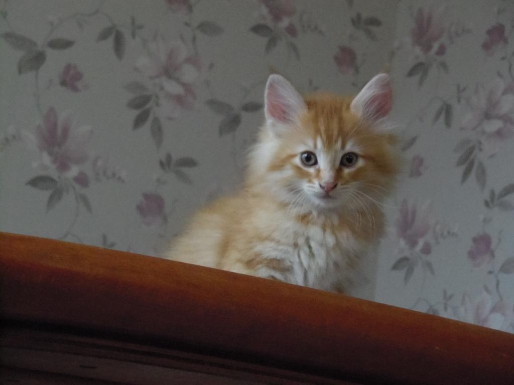 Kattungen Glimra. Fotograf: Susanne Prokop