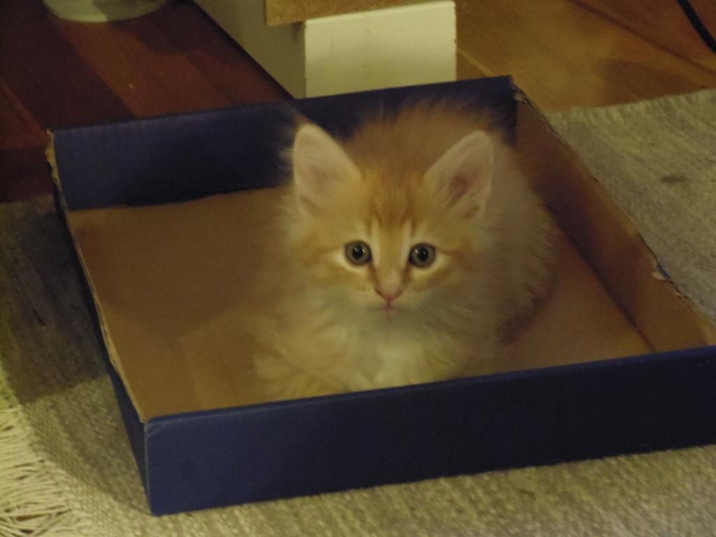 Kattungen Spira. Fotograf: Susanne Prokop