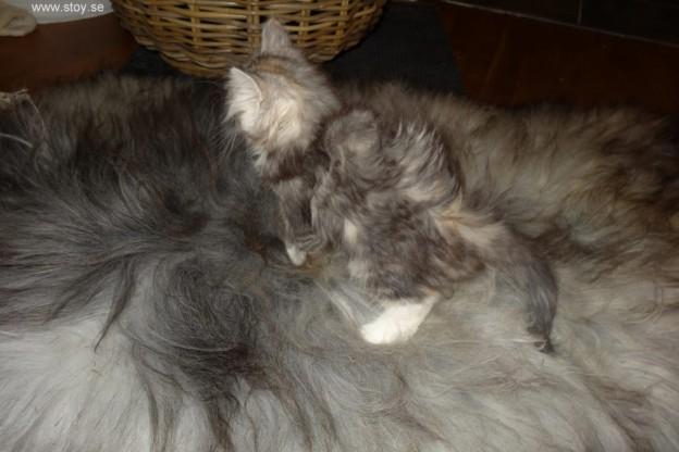 Är det en katt eller en matta?