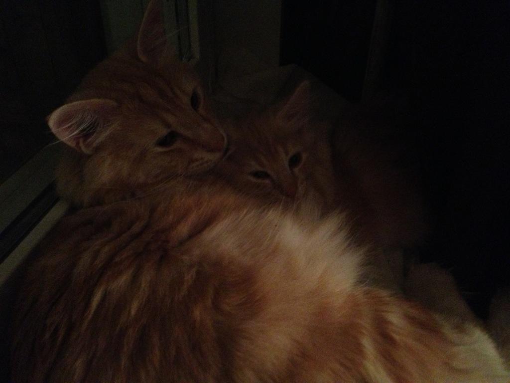 Kattpappa Stoy tar hand om sin lilla Guldklimp.