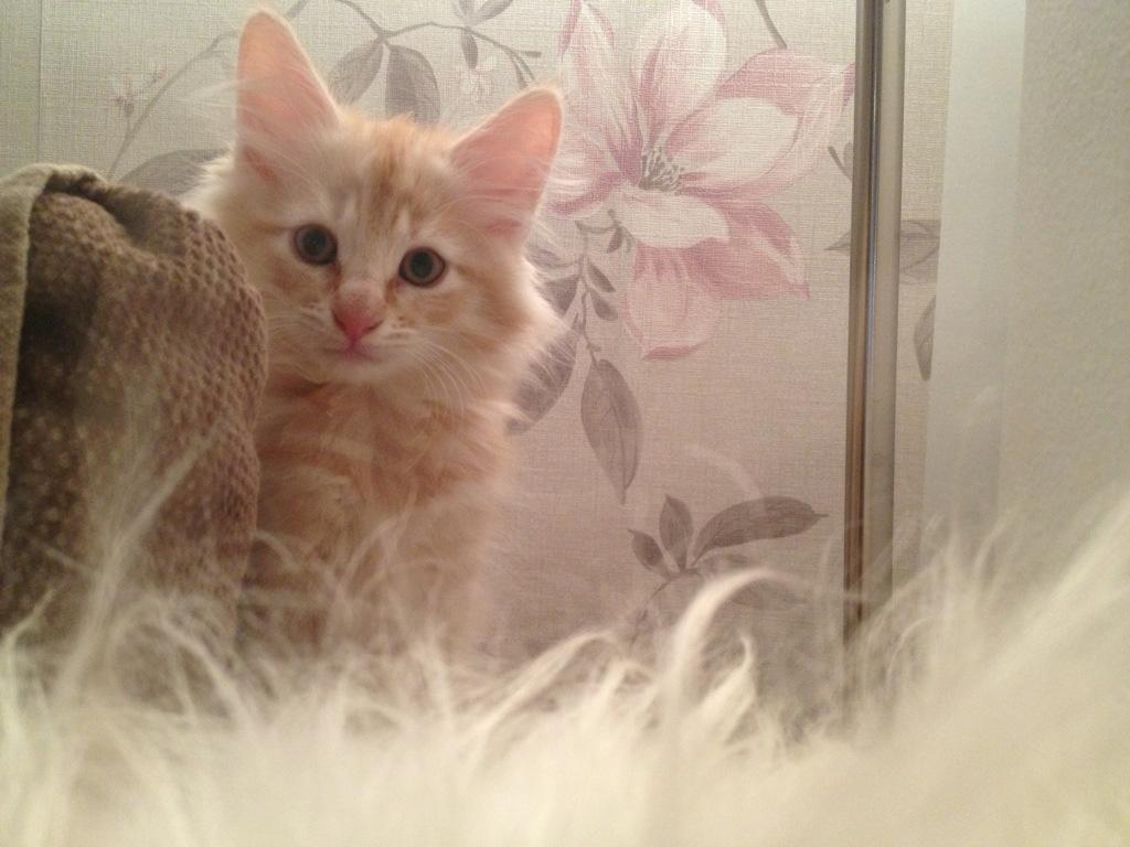 Kattungen Glimta sitter på Soffan.