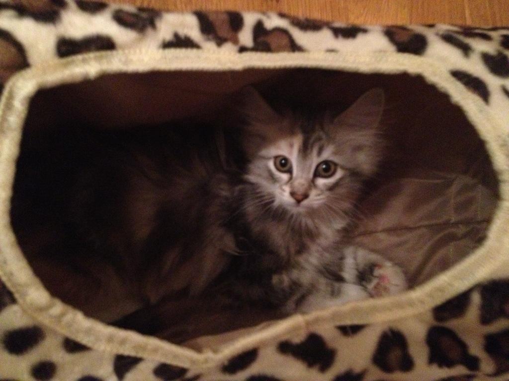 Katungen Virvla leker i lektunneln.