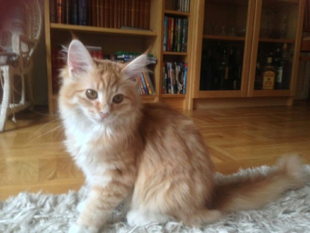 Katten Spira gillar tuffa lekar