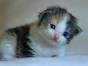 Kattungen Gro två veckor gammal på bilden.