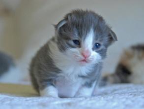 Kattungen Glam, två veckor gammal på bilden.