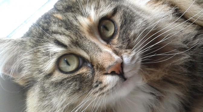 Tjejen kan vara den gosigaste lilla katt som finns