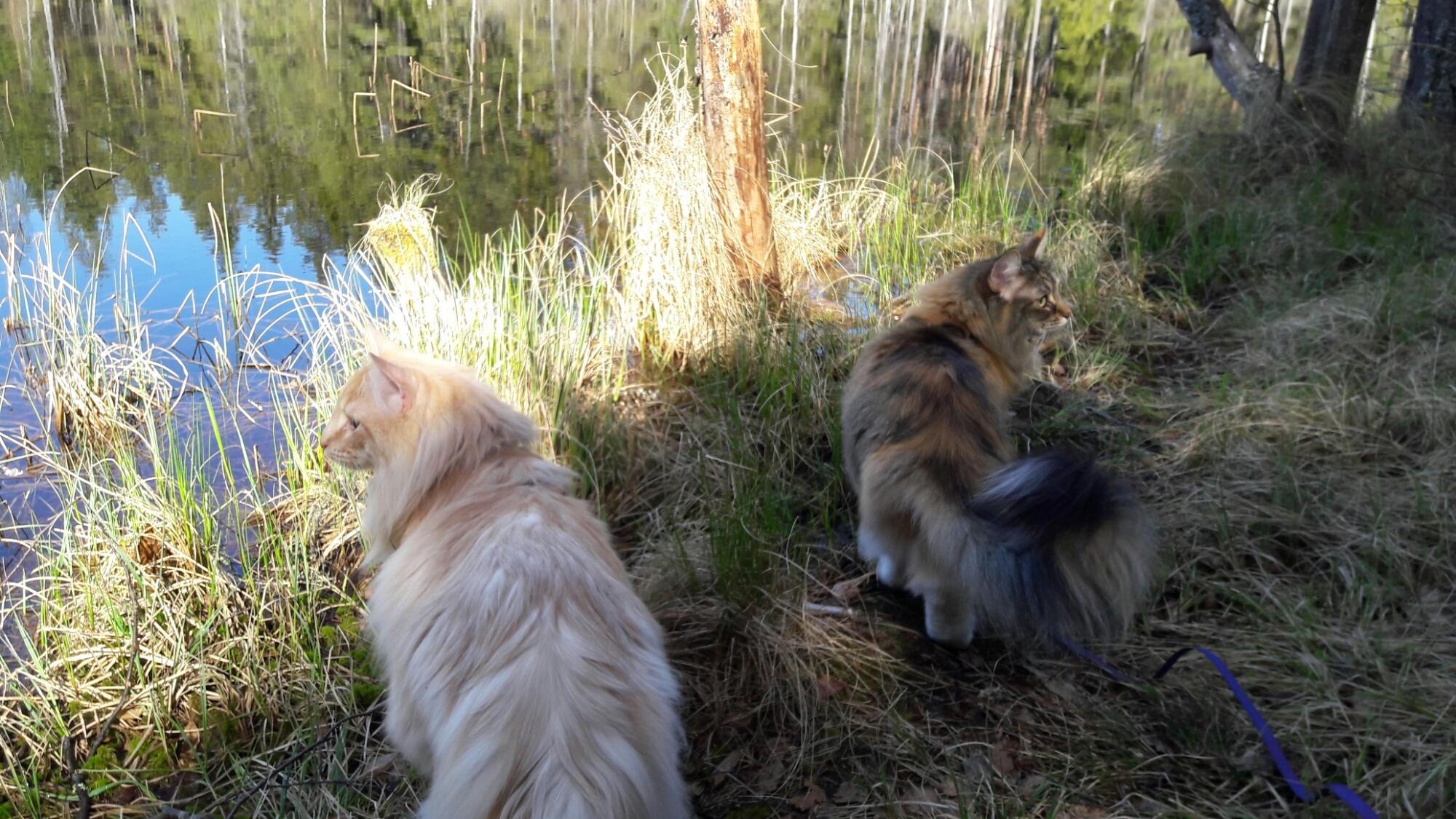 Skogisarna Tjejen och Stoy på promenad vid Järndammen