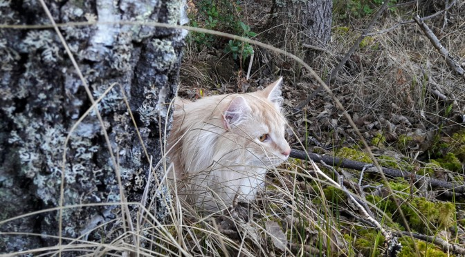 Stoy och Tjejen på skogsäventyr