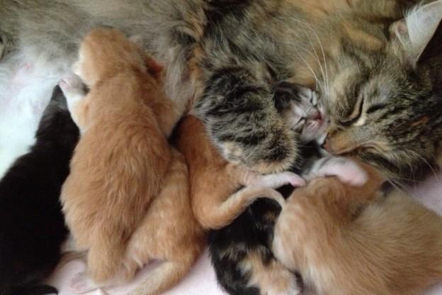 Första kattögat har öppnas på kattungarna