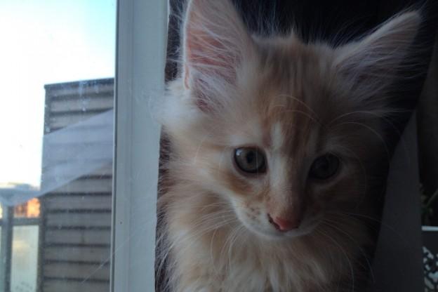 Kattungarnas utveckling vid 10 veckor