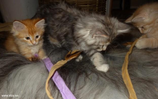 Kattvippan gjord för att leka med 3 kattungar samtidigt