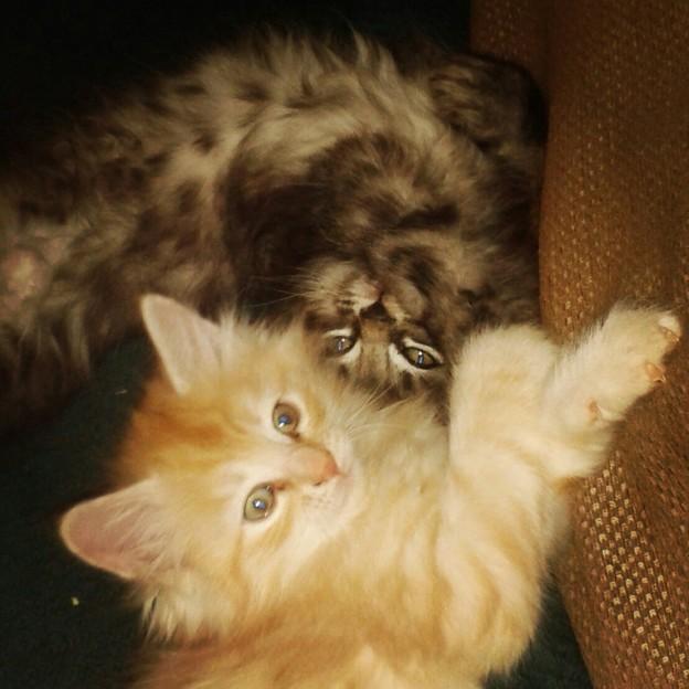 Kattungarna 7 veckor – instagrambilder