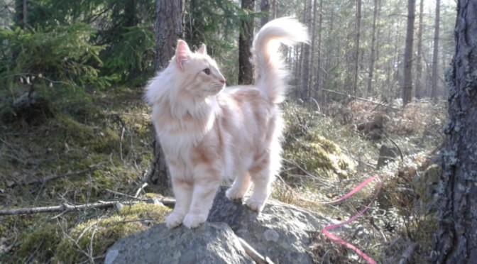 Stoy i klättrartagen i skogen