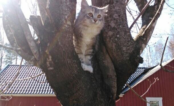 Första gången i trädet måste vara en härlig kattkänsla